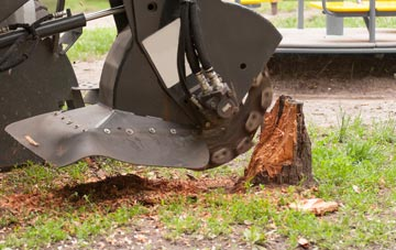 professional Amersham Common stump grinding services
