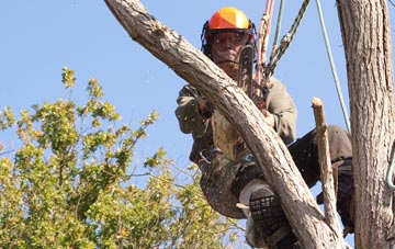 finding qualified Amersham Common tree surgeons