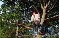 Amersham Common tree crown reduction services